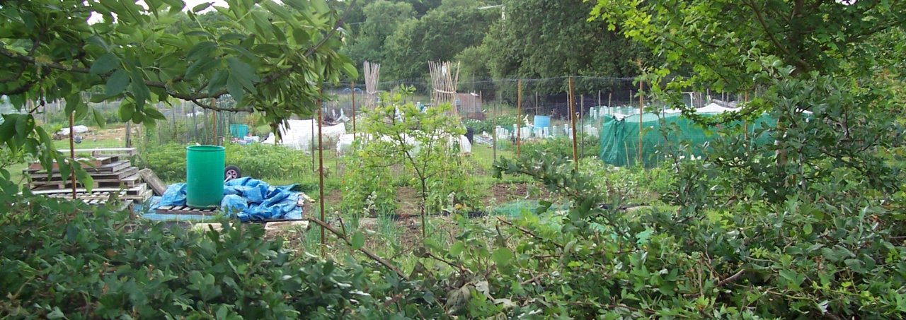 https://burghfieldparishcouncil.gov.uk/wp-content/uploads/2018/12/Allotments-cropped-1280x453.jpg